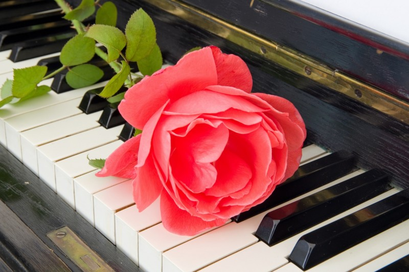 Rose on piano - condolence card (wiht deepest sympathy)